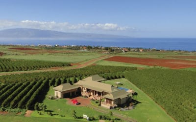 Maui Coffee Farm For Sale in Kaanapali