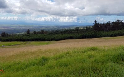 Kula Named Best Place to Escape to in Hawaii