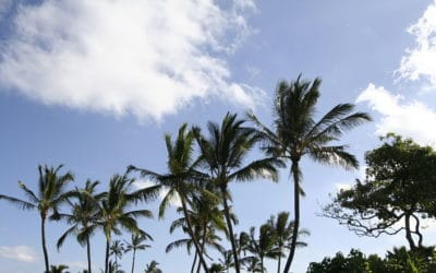 A Good Time to Buy at The Whaler on Kaanapali Beach