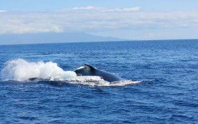 Check out the Lahaina Whale and Ocean Arts Festival